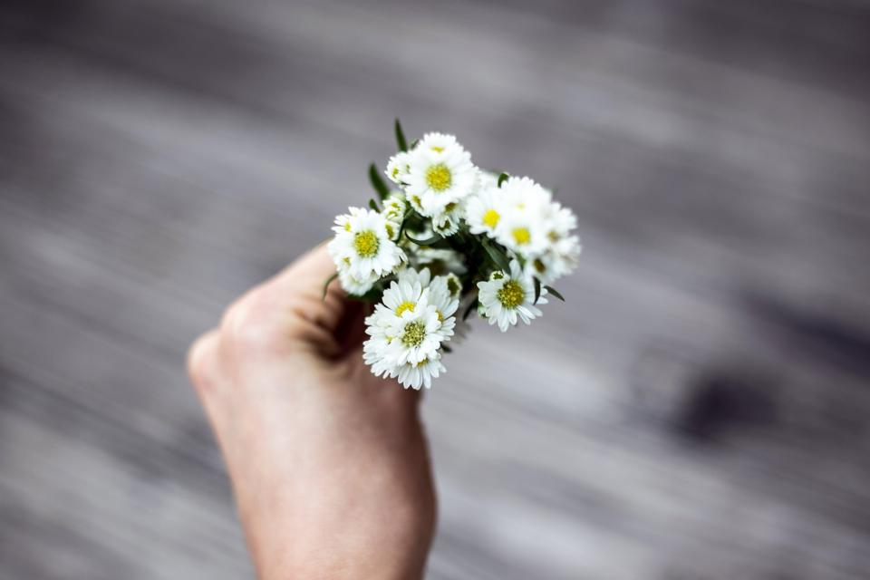 man holding flowers, daisies, hand holding daisies, macro photography,