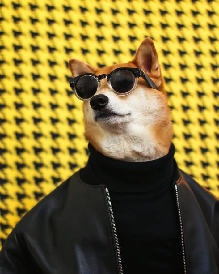 menswear dog turtleneck