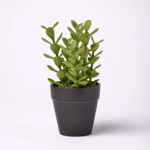 target succulent planter